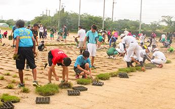 学園祭では来場者も一緒に芝の植え込みを実施